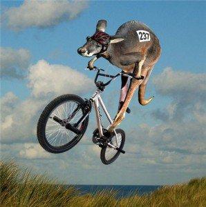 joey on a bike